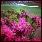 Almost Azalea time at the Masters!! #golf #golfer #instagolf #instagolfer…